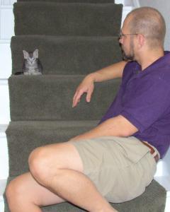 Teeny Tiny Kitty